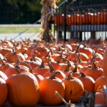 A sea of pumpkins outside Borzynski's Farm Market near Racine.