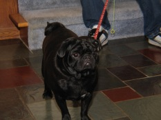 Mr. Puggles, a visitor from Racine.